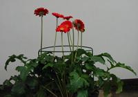 Soportes para flores