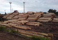 Compra y venta de madera